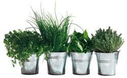 Les-herbes-aromatiques